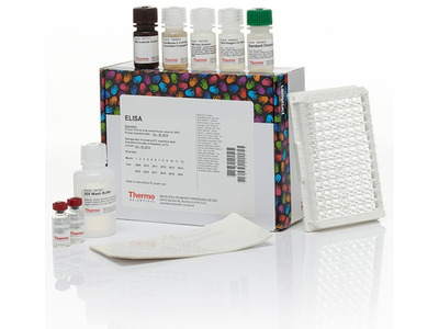 AKT Multispecies In-Cell ELISA Kit, Colorimetric