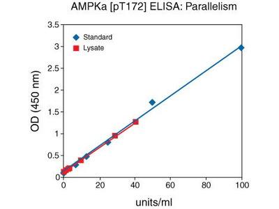AMPK alpha-1,2 (Phospho) [pT172] Human ELISA Kit