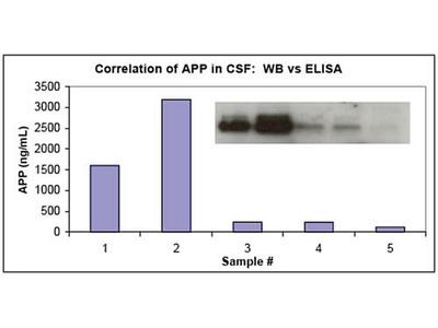 Amyloid Precursor Protein Human ELISA Kit