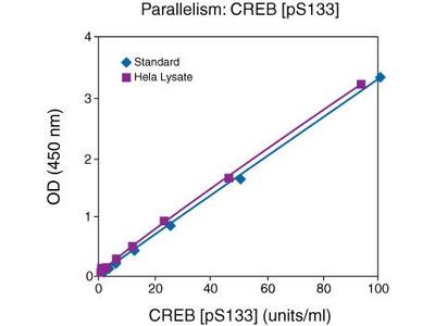 CREB (Phospho) [pS133] Human ELISA Kit