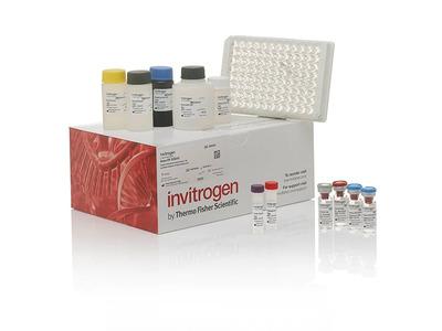TIM-1 (HAVCR1) Human ELISA Kit