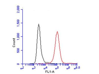 Anti-CD45 antibody