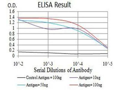 anti-BCL2L10 Antibody