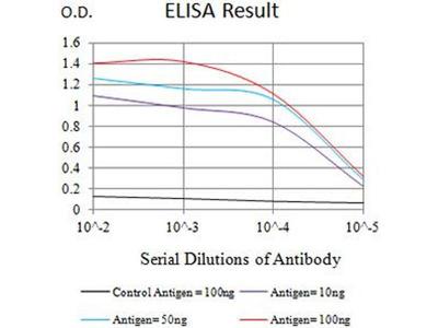 anti-CHRNE Antibody