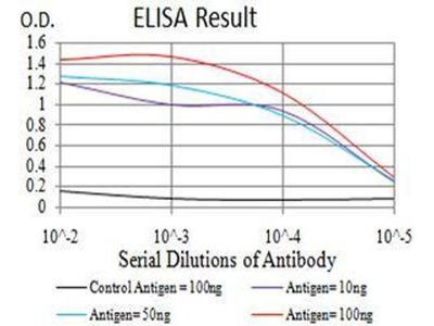 anti-CFHR5 Antibody