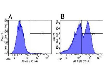 anti-ITGB1 Antibody
