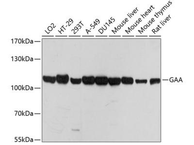 Anti-LYAG antibody