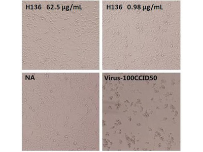 Enterovirus 71 VP1 Recombinant Human Monoclonal Antibody (H136)