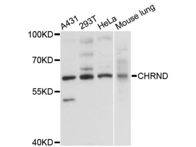 CHRND Polyclonal Antibody