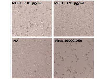 Enterovirus 71 VP4 Monoclonal Antibody (M001)