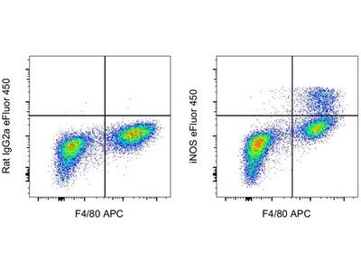 iNOS Monoclonal Antibody (CXNFT), eFluor 450, eBioscience™