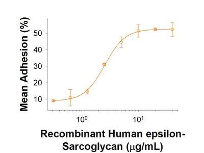 epsilon-Sarcoglycan Fc Chimera Protein