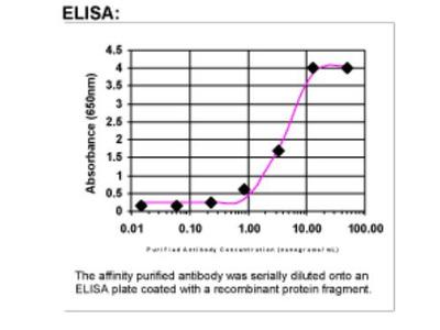 Exostosin-like 2 /EXTL2 Antibody