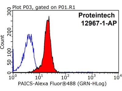 PAICS Polyclonal antibody - KD/KO Validated