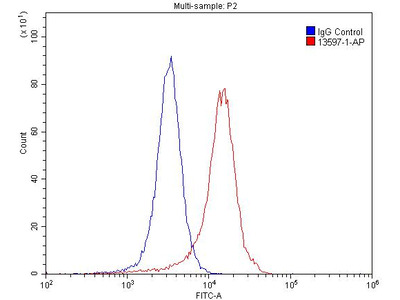 GRIK2 Antibody