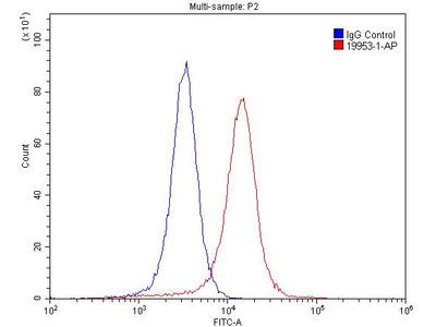 NMDAR2A antibody