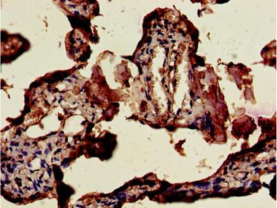 CSHL1 Antibody