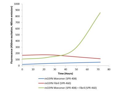 Gamma Synuclein Protein