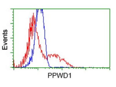 PPWD1 Monoclonal Antibody