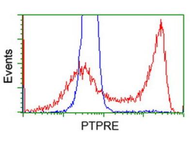PTPRE / PTP Epsilon Monoclonal Antibody