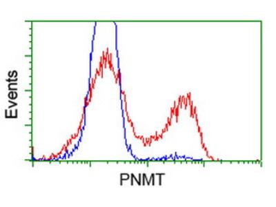 PNMT Monoclonal Antibody