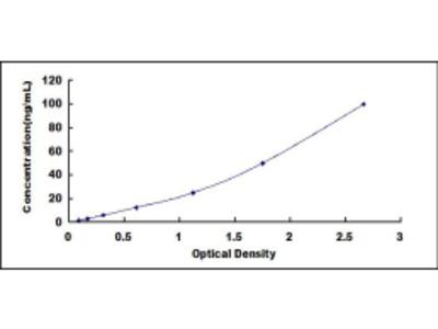 Human Cluster Of Differentiation 8b (CD8b) ELISA Kit