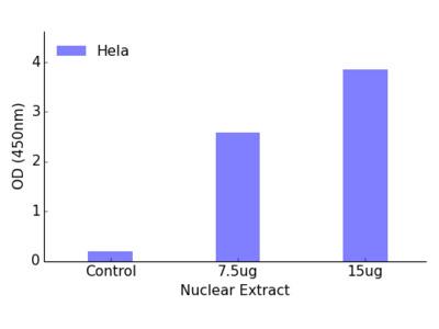 FOXK1 TFact DNA-Binding ELISA Kit