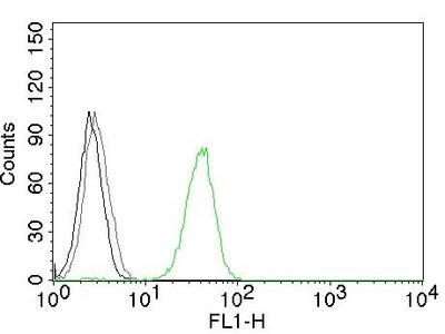CD31/PECAM-1 (Endothelial Cell Marker) Antibody