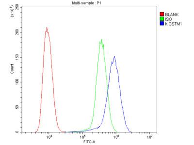 Anti-GSTM1 Antibody (monoclonal, 11F2)