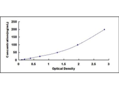 Rat 4-Hydroxyphenylpyruvate Dioxygenase (HPD) ELISA Kit
