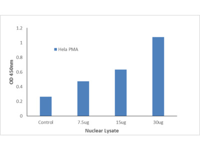 AML1 (Phospho-Ser303) TFact DNA-Binding ELISA Kit