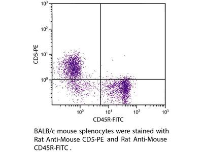 Rat Anti-CD5/Lyt-1 Antibody