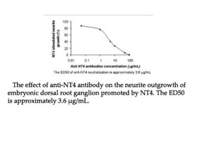 Anti-rh NT4 Antibody