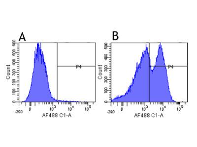 Anti-CD29 [K20]