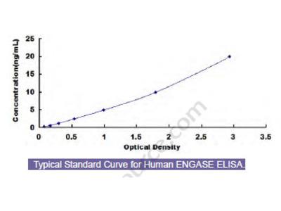 Human Endo Beta-N-Acetylglucosaminidase (ENGASE) ELISA Kit