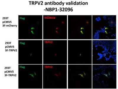 Rabbit Polyclonal VRL1 Antibody