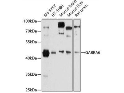 GABRA6 Polyclonal Antibody