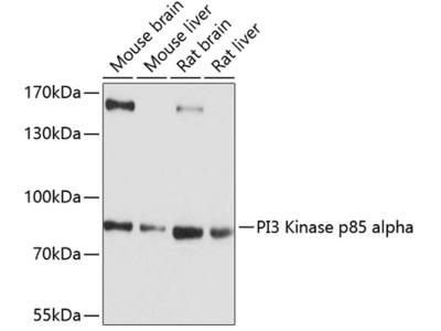 PI3 Kinase p85 alpha Polyclonal Antibody
