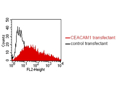anti CD66a/e (CEACAM1/5)