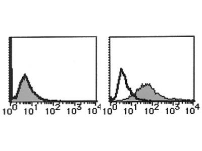 anti CD123 / IL3RA