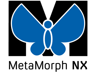 an analysis of metamorphosis Metamorphosis - a tutorial study guide with plot summary, character list,   translations, critical interpretation, and extensive bibliographies.