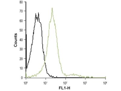 Anti-Human CXCR2 (extracellular)-ATTO Fluor-488 Antibody