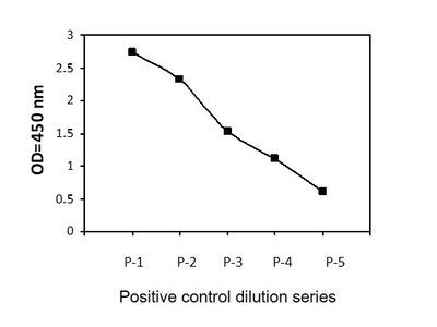 Human/Mouse/Rat Phospho-Beclin-1 (S234) and Total Beclin-1 ELISA