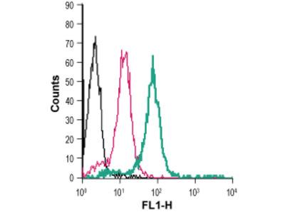 Anti-Prostaglandin E Receptor EP2/PTGER2 (extracellular)-FITC Antibody