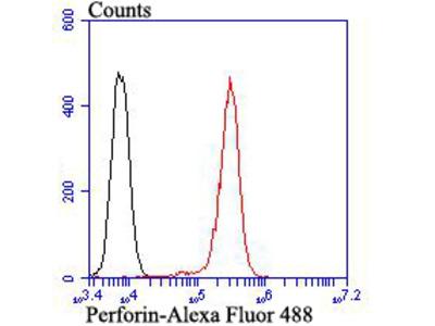 Perforin Rabbit Polyclonal Antibody (ER1803-77)