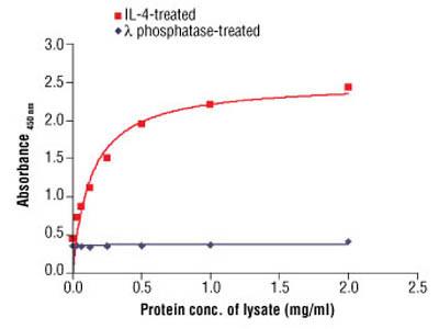 PathScan ® Phospho-cdc2 (Tyr15) Sandwich ELISA Antibody Pair