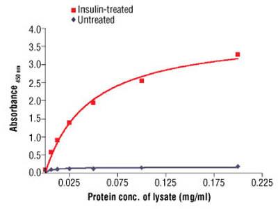 PathScan ® Phospho-Insulin Receptor β (Tyr1146) Sandwich ELISA Antibody Pair