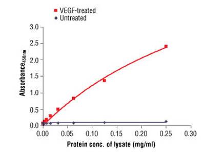 PathScan ® Phospho-VEGFR-2 (Tyr1175) Sandwich ELISA Antibody Pair
