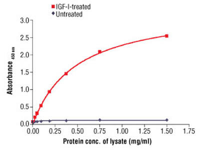 PathScan ® Phospho-IGF-I Receptor β (Tyr1131) Sandwich ELISA Antibody Pair