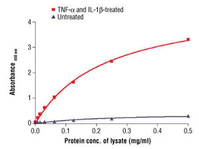 PathScan ® Phospho-NF-κB p65 (Ser536) Sandwich ELISA Antibody Pair